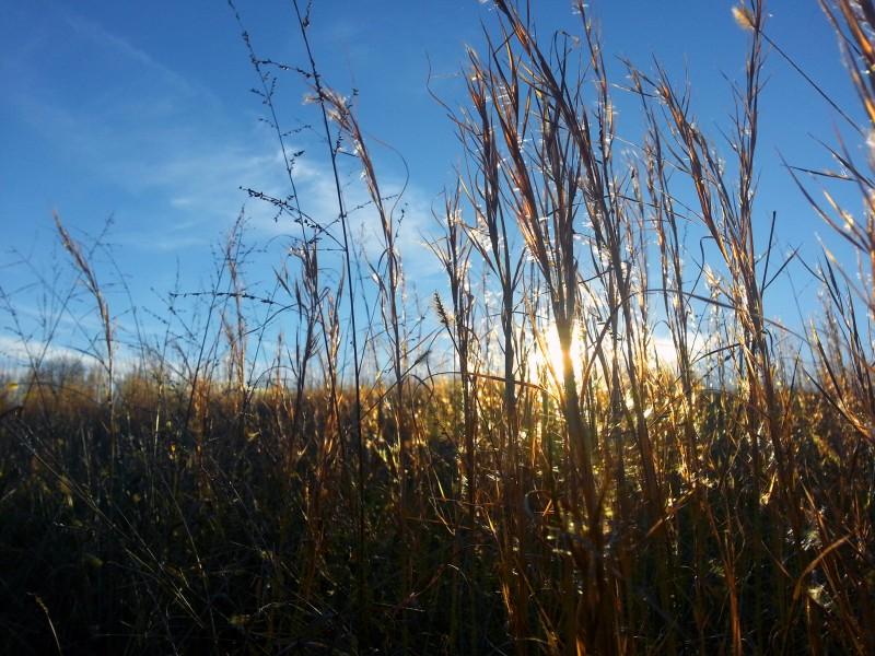 Sunset through the hay