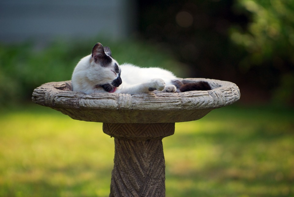 A cat bathing in a birdbath