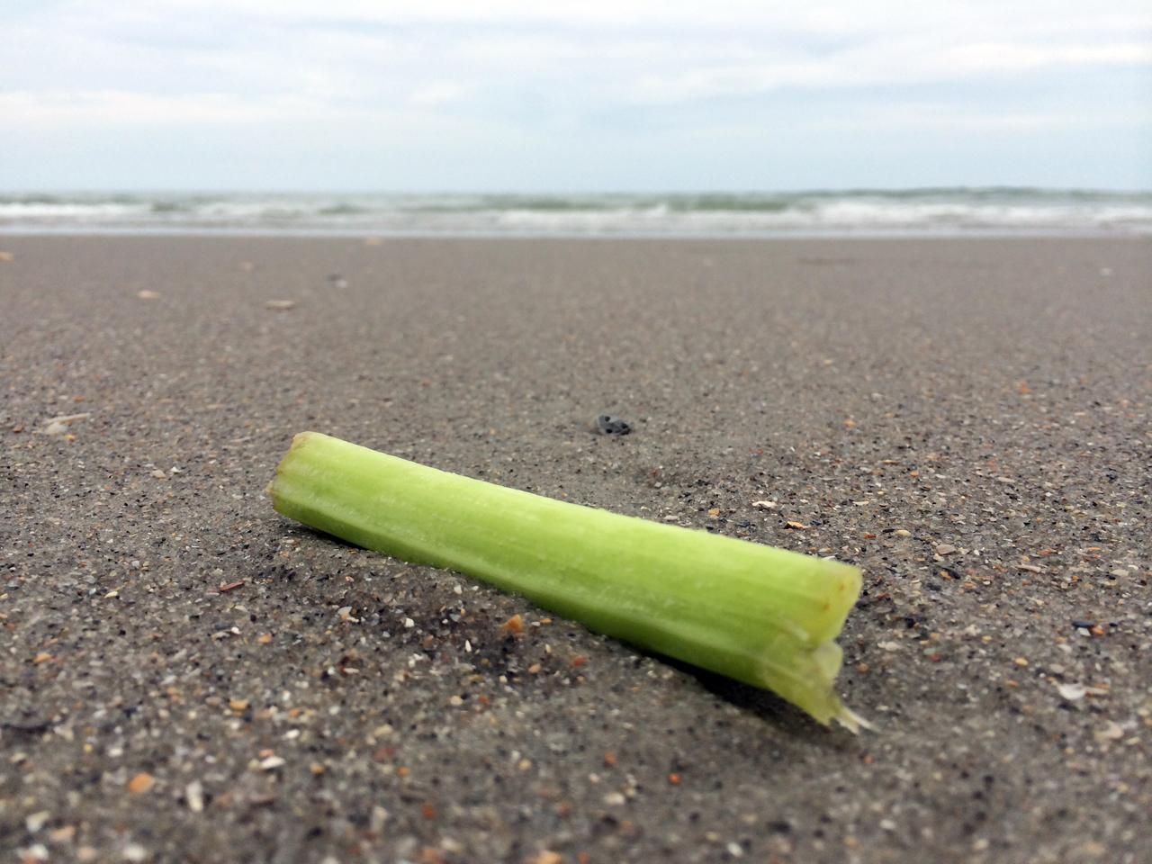 Celery on the beach