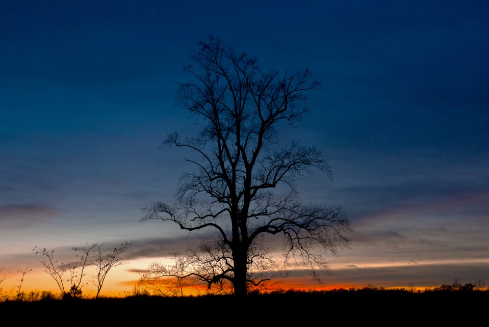 lone_bare_tree_sunset